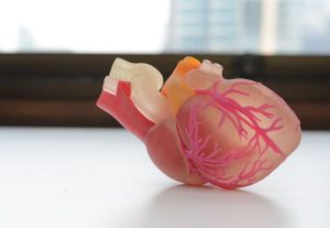 p14 and 16 heart 3D Printing Medical_1